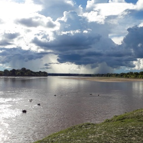 Hippos in the Luangwa River under a dramatic sky.